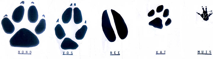 Afbeeldingsresultaat voor diersporen